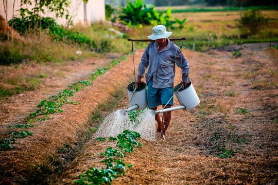 adaptar cultivos a la sequía