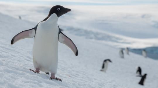 plásticos antártida