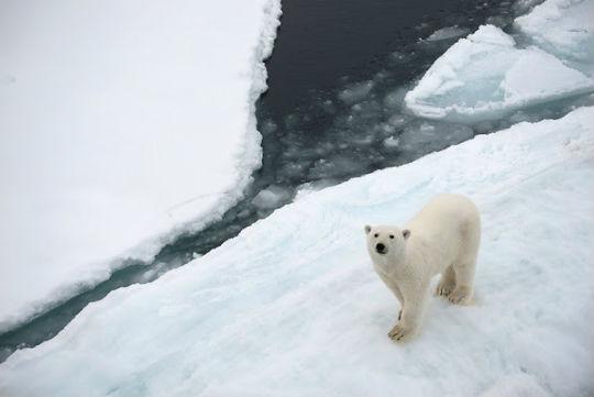 problemas medioambientales en el Ártico