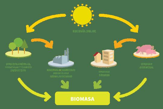biomasa energía renovable