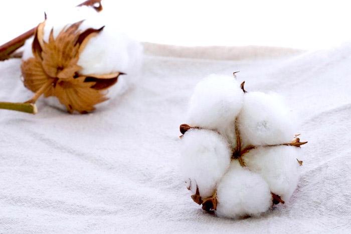 Algodón orgánico: un material de moda y ecológico
