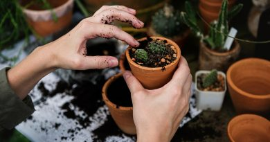 Crear un jardin en el patio con jardineras seakit