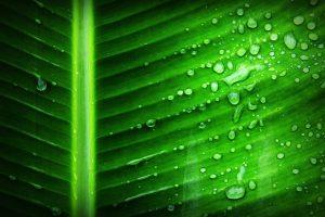 hoja verde con gotas de agua