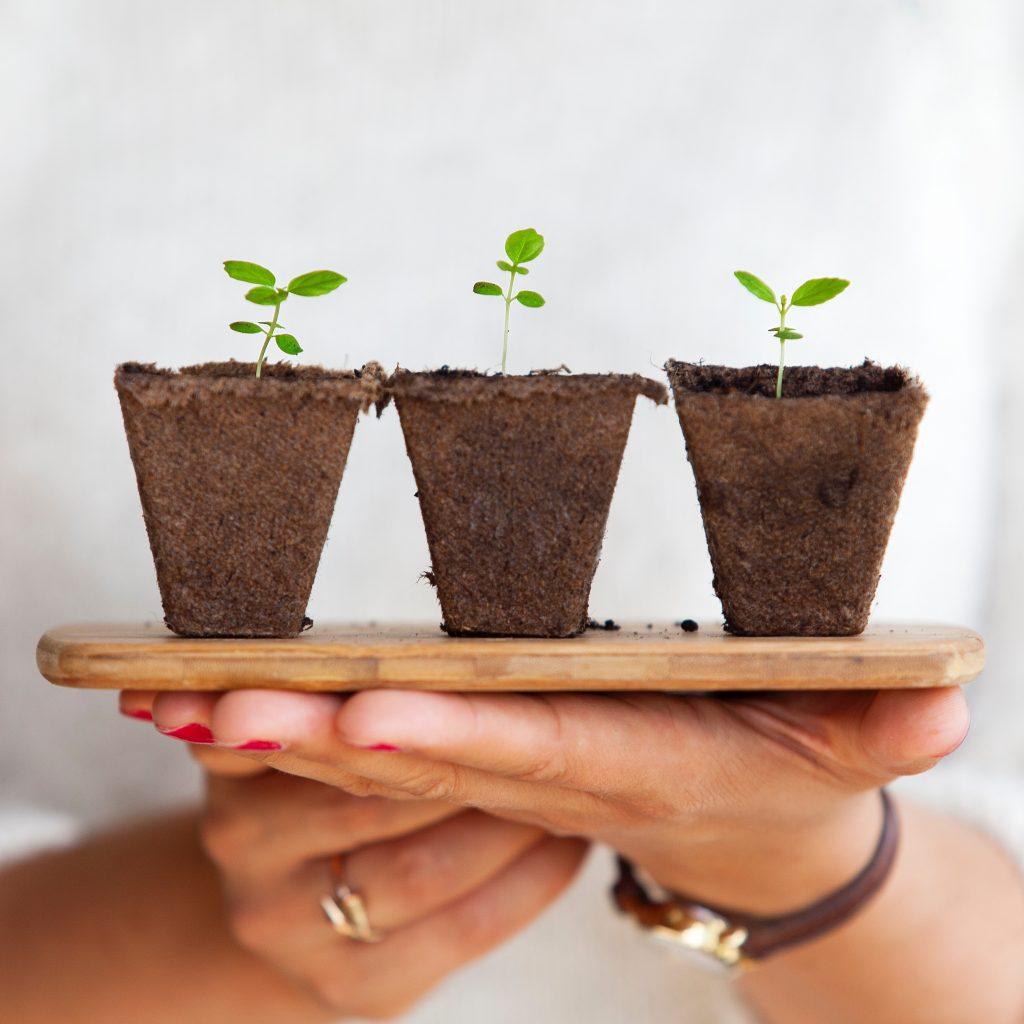 plantas-cultivar-hogar