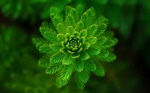 flor verde con cloroplastos