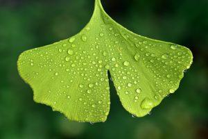 hoja verde con rocío de lluvia