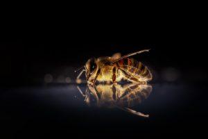 qué productos nos aportan las abejas