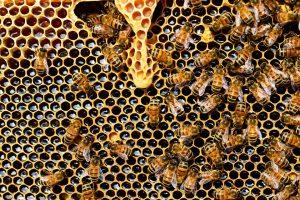 que productos nos aportan las abejas 2
