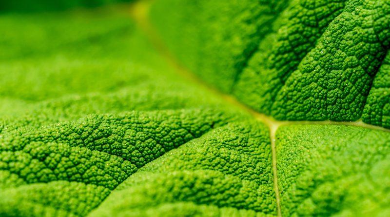 que-es-fotosintesis