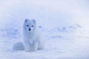 10 películas que deben ver todos los amantes de animales 2