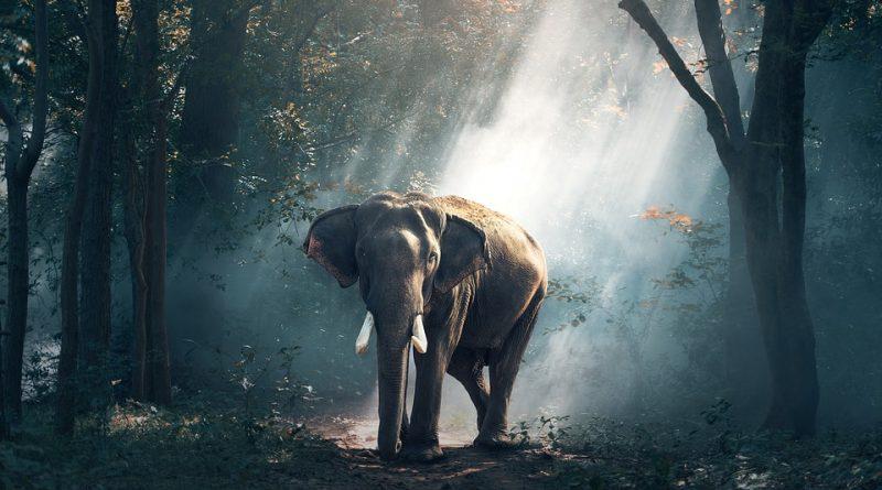 10 películas que deben ver todos los amantes de animales