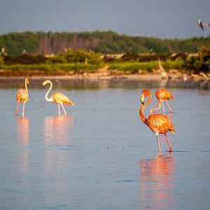 flamenco dentro de rio en destino de ecoturismo