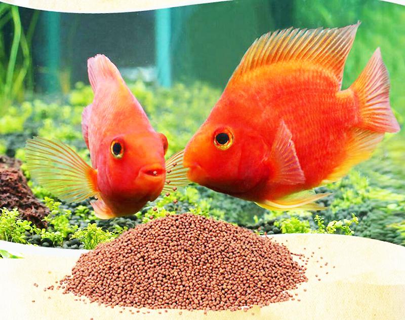 qué comen los peces mascotas