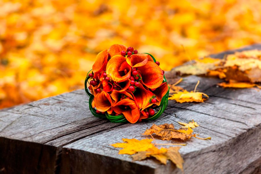 flores de otoño hermosas