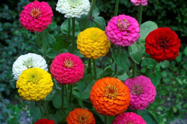 flores de otoño para regalar
