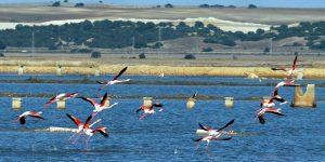 marismas de doñana reserva ecológica