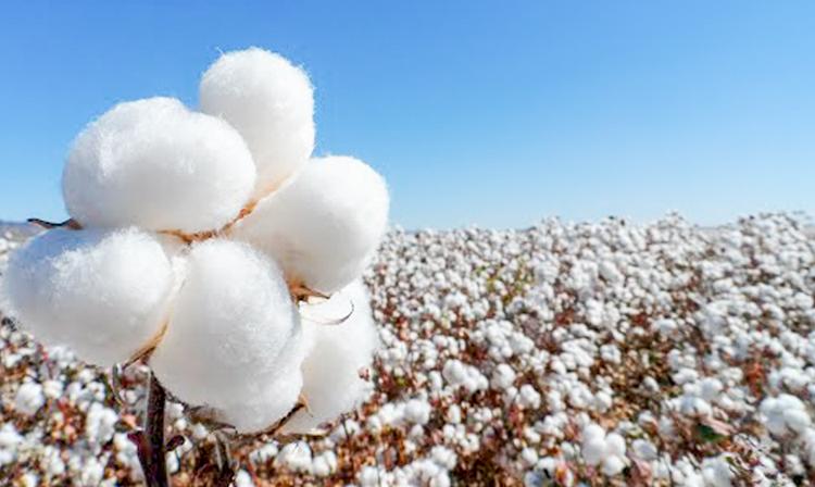 reducir el uso de algodon