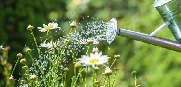 consejos para plantas de verano