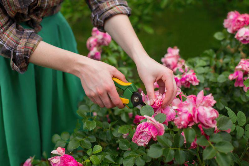 cuidado de plantas de verano