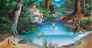 ejemplos de un ecosistema