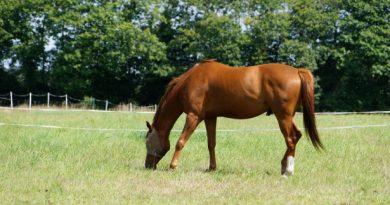 hábitat ideal para un caballo