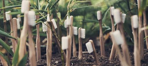 cepillos ecologico