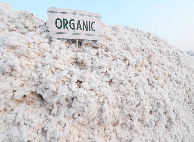 algodón natural