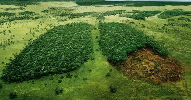Consecuencias de la deforestación