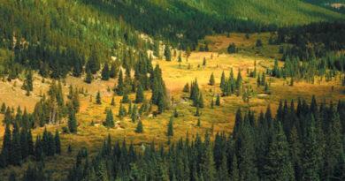 Mejores bosques de españa