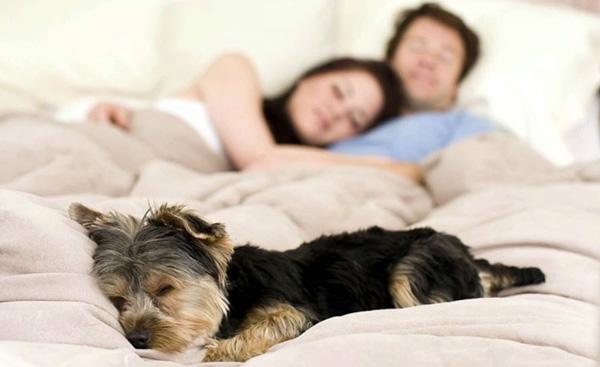 significado de los sueños con animales