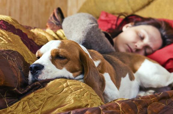 sueños con animales