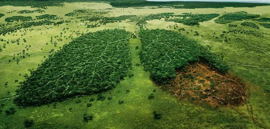 causas y las consecuencias de la deforestación