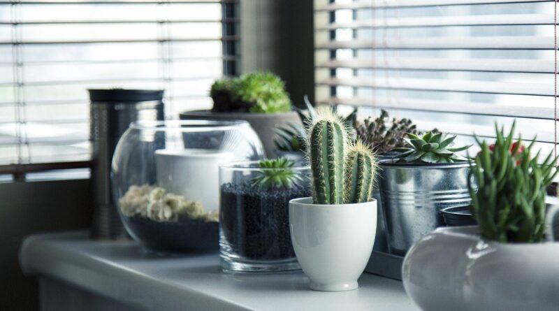 ambiente de naturaleza en tu salón