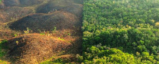 que es la deforestación
