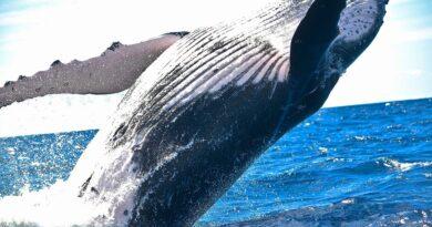 animales marinos más grandes