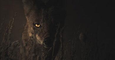 animales nocturnos características