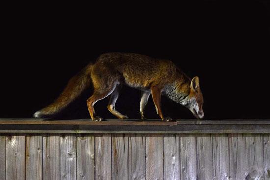 imagenes de animales nocturnos