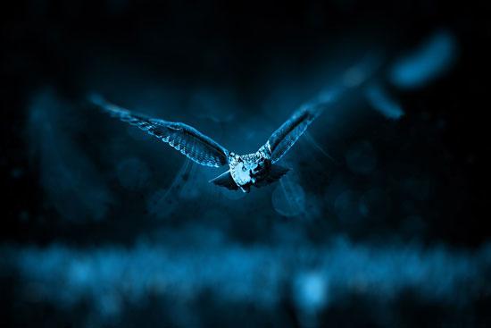 que son animales nocturnos
