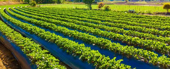 Agricultura ecológicas