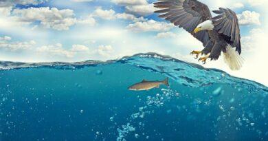 Naturaleza de las Islas Maldivas