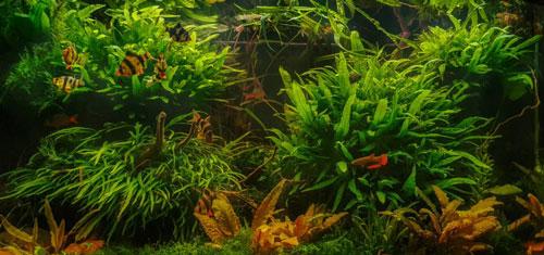 Fertilizantes para acuarios