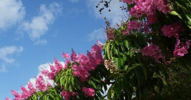 Árboles nativos de Puerto Rico
