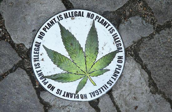 Cannabis legal