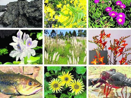 especies exóticas invasoras