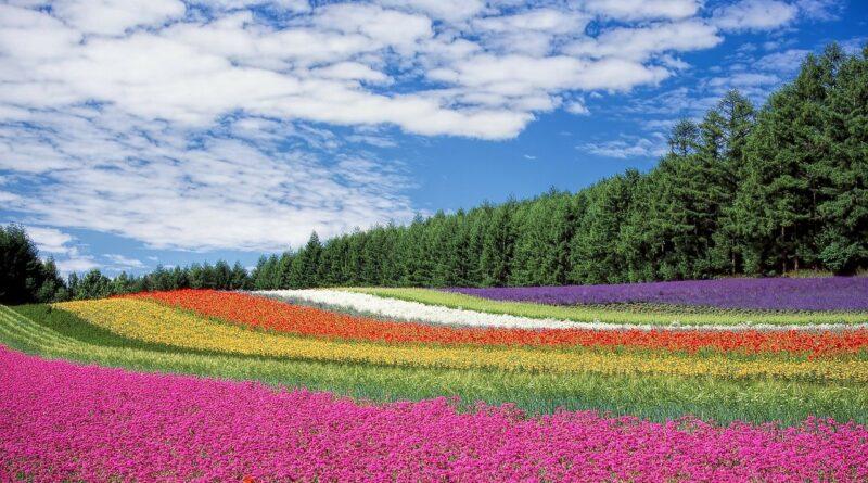 flores con poderes milagrosos